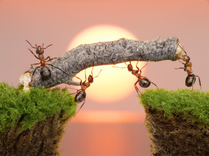 ants with stick