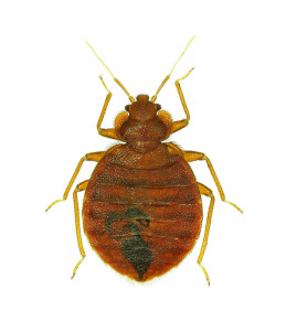 bed bug control in mn
