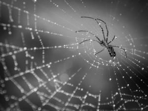 spider on web pest control lawn control - Copy